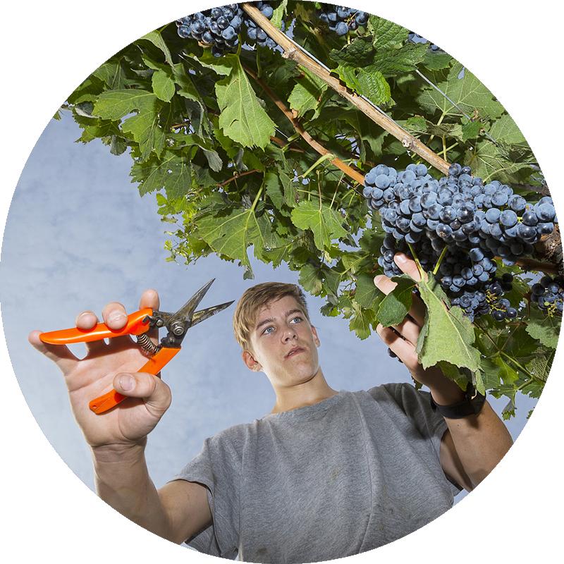 Wein- und Obstbau